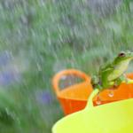 屋根の形別 雨漏りリスク
